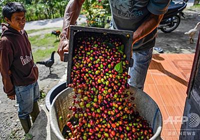 コーヒー種の60%が絶滅の危機、行動すべきは「今」 写真3枚 国際ニュース:AFPBB News
