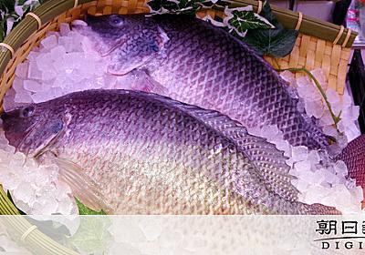 マダイそっくり、でも値段半分 いずみ鯛をイオンが発売:朝日新聞デジタル