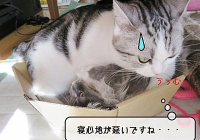 猫の道具 ~何故そうなる~ - 猫と雀と熱帯魚