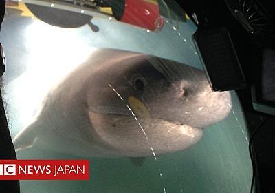 深海750メートルで巨大サメが潜水艇に体当たり - BBCニュース
