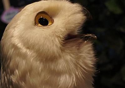フクロウの耳の位置は左右でずれているというのは本当か。|ケノユメ|note