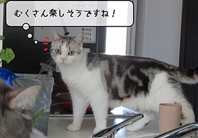 猫雑記 ~猫様達にお土産衝動買い~ - 猫と雀と熱帯魚
