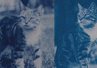 120年前のタイムカプセルに愛猫の写真のネガが!当時の少女の想いが現像と共に蘇る(フランス) : カラパイア