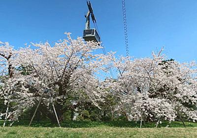エネルギーみなぎる元町配水場の百年桜姉妹 | 函館・青柳町暮らし