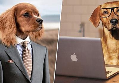 年に一度、職場に飼い犬を連れていくことができるチャリティイベントが今年もイギリスで開催される。 : カラパイア