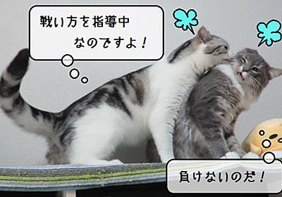 猫動画 ~「静かなる戦い」~ - 猫と雀と熱帯魚
