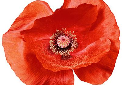 From memory to history - Farewell to WW1
