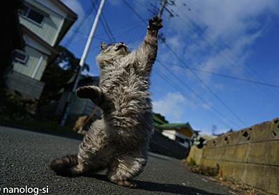 猫拳の撮り方とカメラの設定方法in田代島 | 恣意的なのログ
