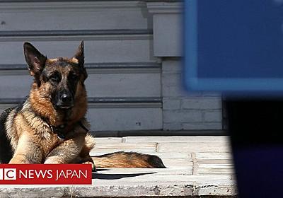バイデン夫妻、愛犬「チャンプ」の死を発表 - BBCニュース