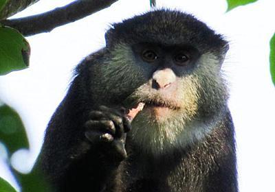 サルがコウモリを食べているのが初めて目撃される。エボラなどの感染経路にも関係する発見   ギズモード・ジャパン