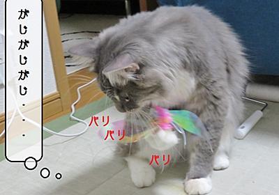 猫の道具 ~わが家のカシャぶん~ - 猫と雀と熱帯魚