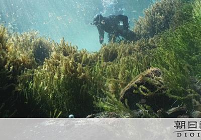 潜っても、潜っても… 水底の硬貨、回収するダイバー:朝日新聞デジタル