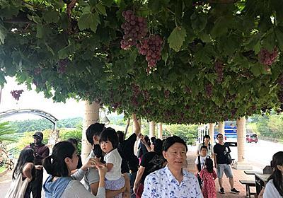 中国人の社員旅行に参加した 初めて分かった「彼らが日本人から受ける視線」:朝日新聞GLOBE+