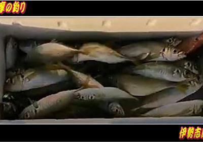 釣りキチ釣り師たち、アオリイカ、サビキ釣り、アジ - 海釣(カイチョウ)倶楽部