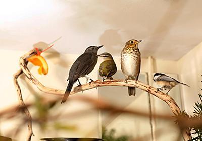 鳥のビルへの衝突を防ぐには、米国では年最大10億羽が犠牲に | ナショナルジオグラフィック日本版サイト