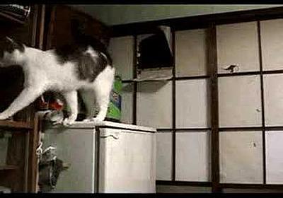 ご飯支度中の珍入猫 Japanese cat door 1