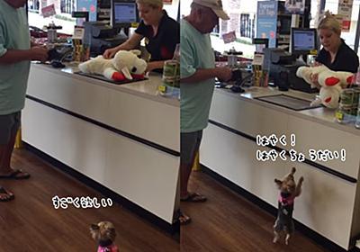 こうてもろた。ぬいぐるみを買ってもらって大喜びの犬。自分より大きいぬいぐるみを車まで持ち運ぶ : カラパイア