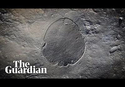 Scientists reveal secrets of oldest known animal fossil - YouTube