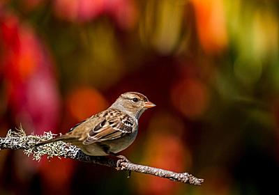 殺虫剤で渡り鳥が「遅延」、激減と関連か、北米 | ナショナルジオグラフィック日本版サイト