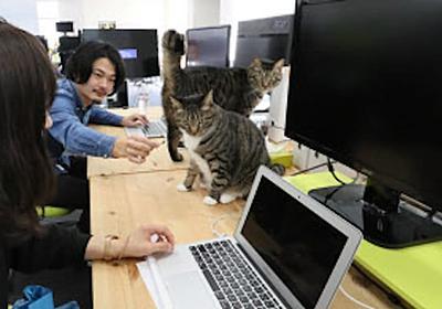 ネコノミクス化ける お猫様、人・カネ招く(日経MJ): 日本経済新聞