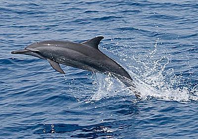 イルカの「会話」が地球外知的生命体からのメッセージの探索に大きく関与していた - GIGAZINE