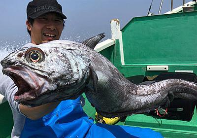 """深海1000mの通称""""怪獣"""" 「ソコダラ」たちを釣って食べる :: デイリーポータルZ"""