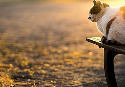 【猫】いろんな場所で見つけた野良猫たち その7|カメラとおでかけ