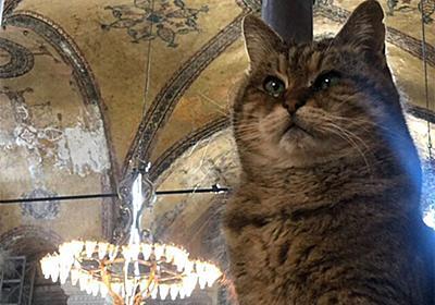 【RIP】トルコの博物館の案内役として常駐し、多くの人に愛されていた猫のグリが天命を全うし虹のたもとに向かう : カラパイア