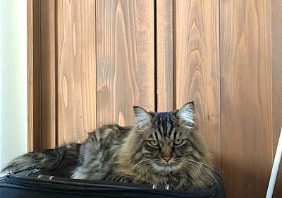 開かずの扉 - えと的日常〜猫がブログ始めました〜