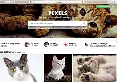 商用利用無料のネコの写真素材がいっぱいある! -Pexels Cats | コリス