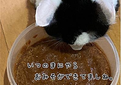 好きな福の写真10選 - 福ふく堂 -猫のおもちゃ箱-