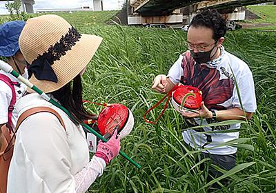 蟲ソムリエ 佐伯真二郎 「おいしい昆虫記」発売記念、昆虫と野草を食べる会レポート - 私的標本:捕まえて食べる