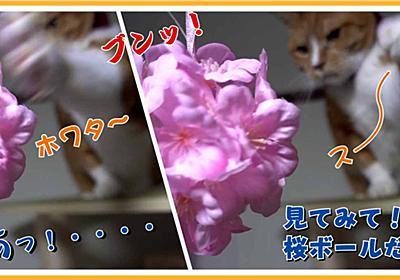 猫の花見用に桜ボールを用意してみました | ヒヨリどんの猫日和II