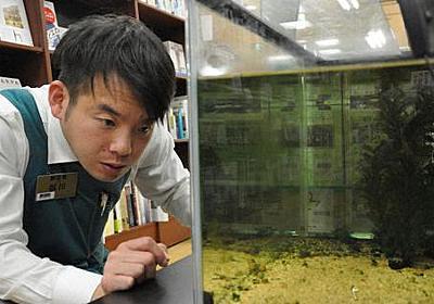 都会の本屋で絶滅危惧種のドジョウが自然繁殖 水槽内では世界初 福岡・天神 - 毎日新聞