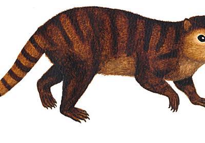 恐竜が絶滅したあとの哺乳類を繁栄させた立役者 | ギズモード・ジャパン