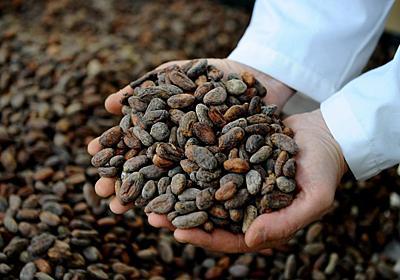 エクアドル産チョコに復活の兆し その影の立役者 | ナショナルジオグラフィック日本版サイト