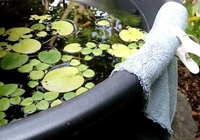雨でメダカが流れ出ないように簡易オーバーフロー対策 | 40代のセミリタイア生活