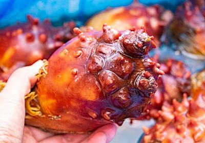 食わず嫌いの皆さんに新鮮な「ほや」の美味しさを知って欲しい【海のパイナップル】 - メシ通 | ホットペッパーグルメ