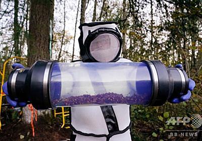 米で発見の「殺人バチ」の巣、無事駆除 写真15枚 国際ニュース:AFPBB News
