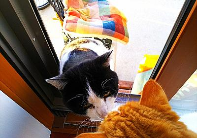 外猫むーちゃんにフロントラインする - マルごしサン・ブログ
