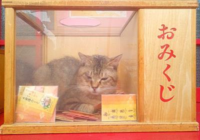 寺の自由すぎるネコ おみくじ箱に入り込む姿に「なで放題おみくじとか最高!」「ちゅーるで引きだせますか?」 - ねとらぼ