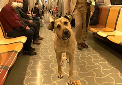"""独りで電車・バス・フェリーに搭乗するトルコの野良犬""""ボジ""""くん♪ 賢く皆から愛されるも自由すぎる振舞いに苦情も・・・"""