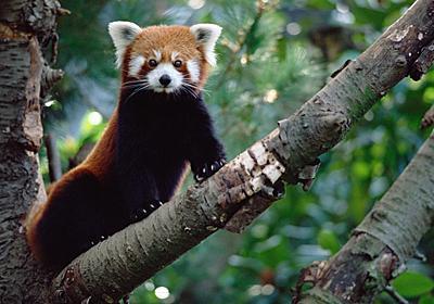 哺乳類の多様性、回復に数百万年、今の大量絶滅で | ナショナルジオグラフィック日本版サイト