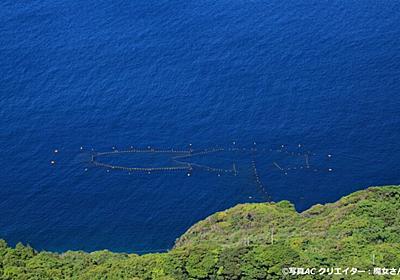 マンボウ類が絶滅すると定置網漁師に4080万円以上の損失が出る?│マンボウなんでも博物館