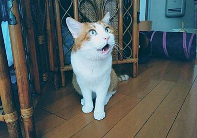 世界猫の日~World Cat Day~2021 - にゃにゃにゃ工務店