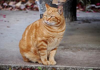 住宅街に野生のネコ出没 警戒呼びかけ 東京・世田谷区