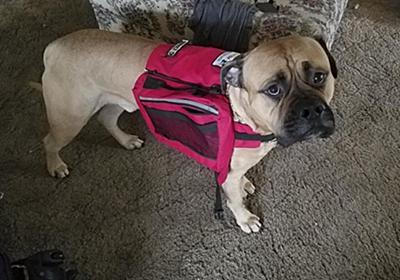 もしも介助犬がたった1匹であなたに近寄ってきたら?その時にやるべき対応 : カラパイア