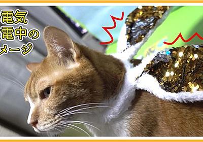 猫はコタツの中にいすぎるから静電気持ちなのかも | ヒヨリどんの猫日和II