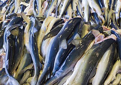 食材狩人2-5:大漁そして入札! | 80C