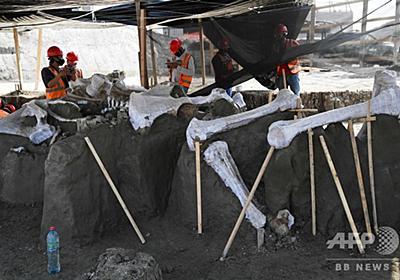 新空港建設現場から「マンモスの墓場」出土 メキシコ 写真18枚 国際ニュース:AFPBB News